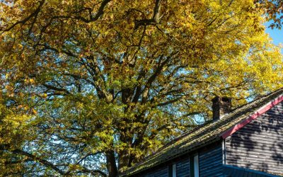 5 Surprising Benefits of Buying Your Home in Autumn
